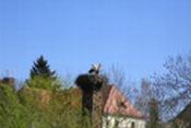 Foto: Storchennest in Hohenschönhausen